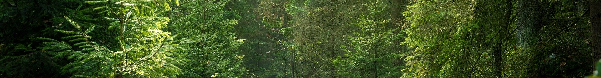 A banner image of a deep green forest